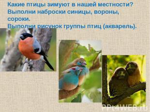 Какие птицы зимуют в нашей местности?Выполни наброски синицы, вороны, сороки.Вып