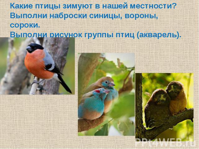 Какие птицы зимуют в нашей местности?Выполни наброски синицы, вороны, сороки.Выполни рисунок группы птиц (акварель).