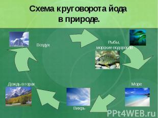 Схема круговорота йода в природе.