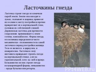 Ласточкины гнезда Ласточка строит гнездо из комочков сырой земли. Землю она нахо