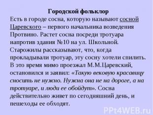 Городской фольклорЕсть в городе сосна, которую называют сосной Царевского – перв