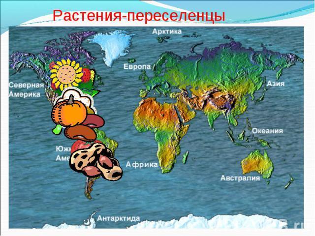 Растения-переселенцы