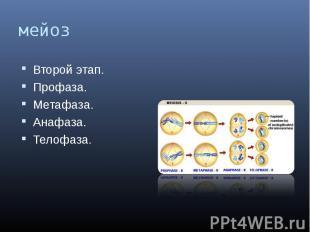 мейоз Второй этап.Профаза.Метафаза.Анафаза.Телофаза.