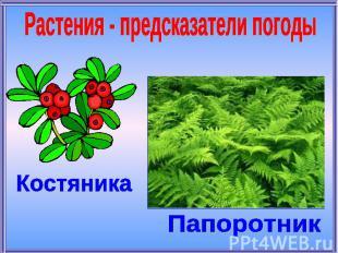 Растения - предсказатели погодыКостяникаПапоротник