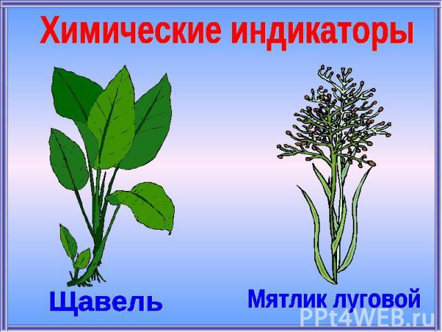 Химические индикаторыЩавельМятлик луговой