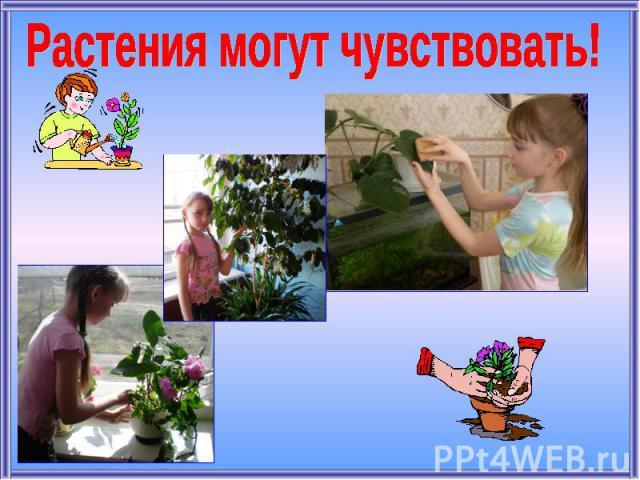 Растения могут чувствовать!