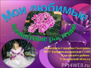 Мои любимые комнатные растения Выполнила Сидорова ЕкатеринаМОУ Большекандаратска