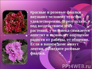 Красные и розовые фиалки внушают человеку чувство удовлетворения. В результате,