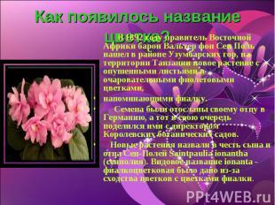 Как появилось название цветка? В 1892 году правитель Восточной Африки барон Валь