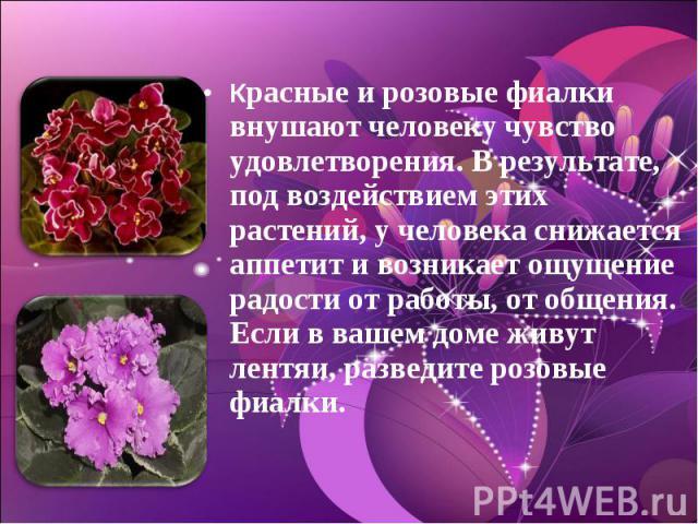 Красные и розовые фиалки внушают человеку чувство удовлетворения. В результате, под воздействием этих растений, у человека снижается аппетит и возникает ощущение радости от работы, от общения. Если в вашем доме живут лентяи, разведите розовые фиалки.