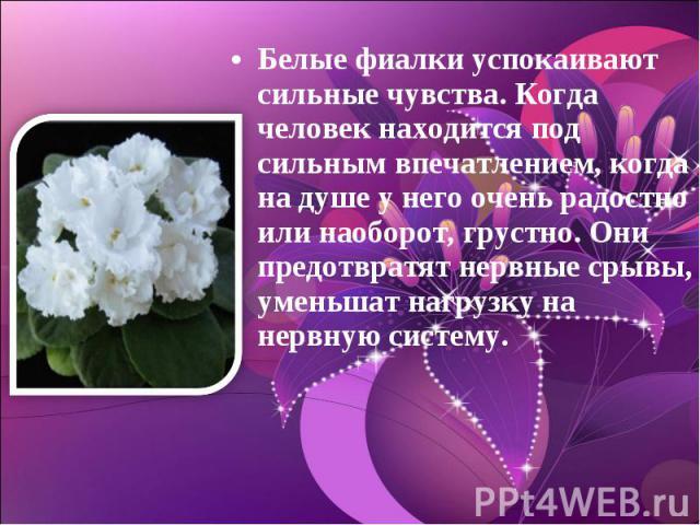 Белые фиалки успокаивают сильные чувства. Когда человек находится под сильным впечатлением, когда на душе у него очень радостно или наоборот, грустно. Они предотвратят нервные срывы, уменьшат нагрузку на нервную систему.
