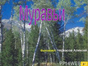 Муравьи Выполнил: Черкасов Алексей