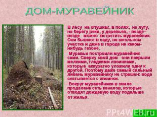 ДОМ-МУРАВЕЙНИК В лесу на опушках, в полях, на лугу, на берегу реки, у деревьев,