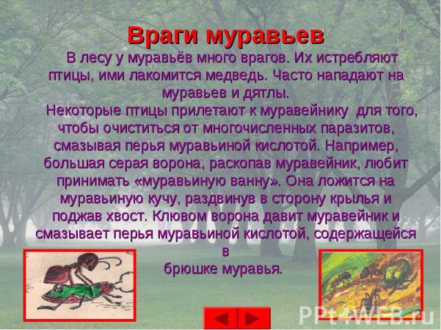 Враги муравьев В лесу у муравьёв много врагов. Их истребляютптицы, ими лакомится медведь. Часто нападают намуравьев и дятлы. Некоторые птицы прилетают к муравейнику для того,чтобы очиститься от многочисленных паразитов,смазывая перья муравьиной кисл…