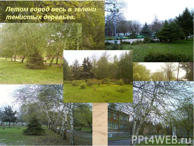 Летом город весь в зелени тенистых деревьев.