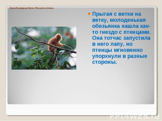 Прыгая с ветки на ветку, молоденькая обезьянка нашла как-то гнездо с птенцами. Она тотчас запустила в него лапу, но птенцы мгновенно упорхнули в разные стороны.
