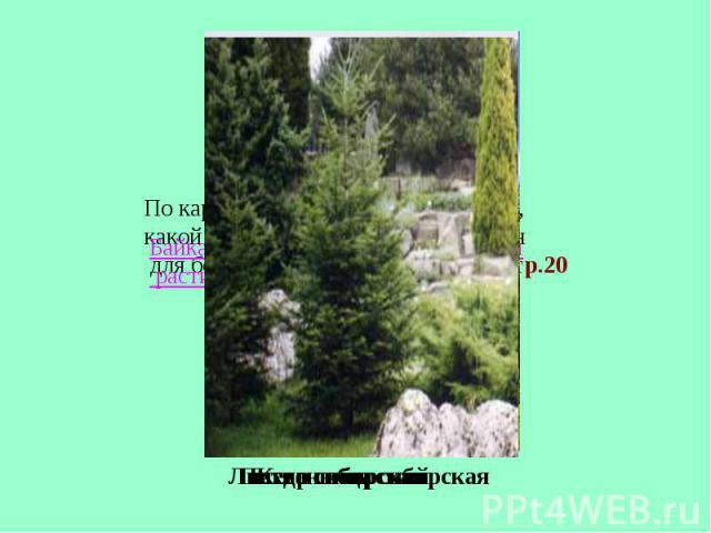По карте растительности определите, какой тип растительности характерен для берегов озера Байкала? Атлас стр.20Пихта сибирская