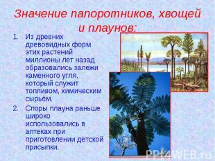 Значение папоротников, хвощей и плаунов: Из древних древовидных форм этих растен