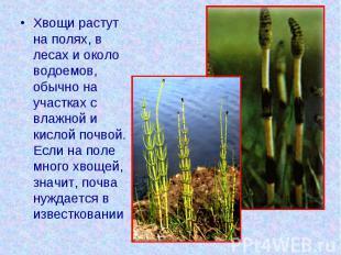 Хвощи растут на полях, в лесах и около водоемов, обычно на участках с влажной и