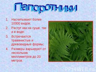 Папоротники Насчитывают более 10000 видов;Растут как на суше, так и в воде;Встре