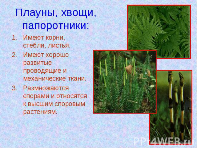 Плауны, хвощи,папоротники: Имеют корни, стебли, листья.Имеют хорошо развитые проводящие и механические ткани.Размножаются спорами и относятся к высшим споровым растениям.