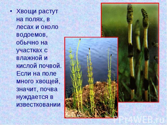 Хвощи растут на полях, в лесах и около водоемов, обычно на участках с влажной и кислой почвой. Если на поле много хвощей, значит, почва нуждается в известковании
