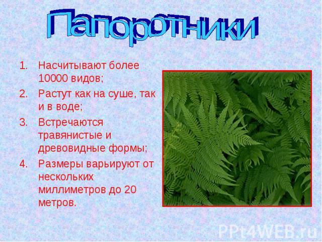 Папоротники Насчитывают более 10000 видов;Растут как на суше, так и в воде;Встречаются травянистые и древовидные формы;Размеры варьируют от нескольких миллиметров до 20 метров.