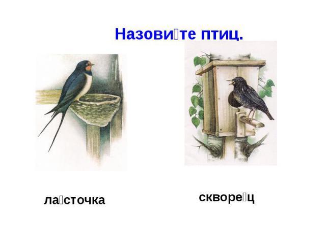 Назовите птиц.ласточкаскворец