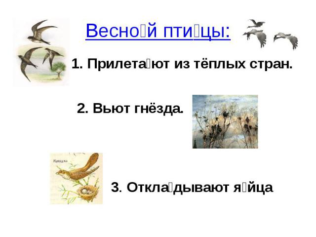 Весной птицы: Прилетают из тёплых стран.2. Вьют гнёзда.3. Откладывают яйца