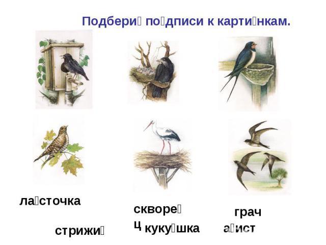 Подбери подписи к картинкам.ласточкастрижискворецграч