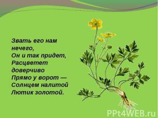 Звать его нам нечего,Онитак придет,Расцветет доверчивоПрямо уворот—Солнцем н