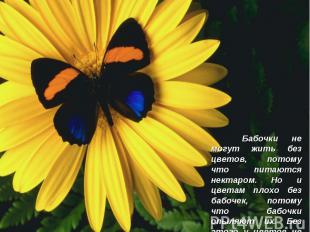 Бабочки не могут жить без цветов, потому что питаются нектаром. Но и цветам плох
