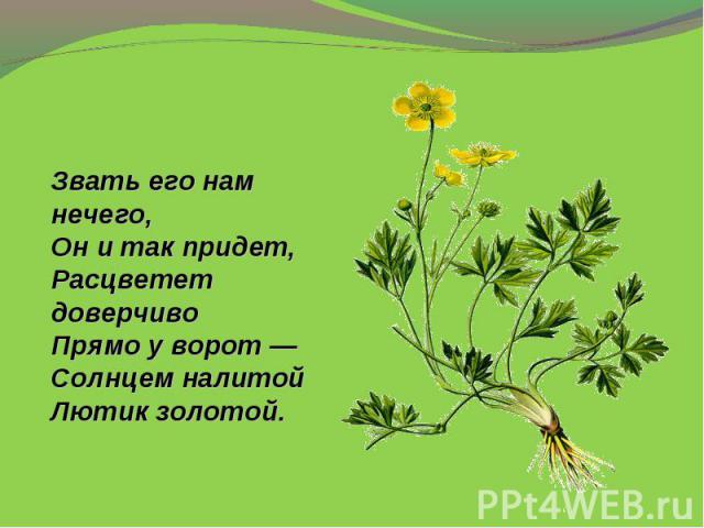 Звать его нам нечего,Онитак придет,Расцветет доверчивоПрямо уворот—Солнцем налитойЛютик золотой.
