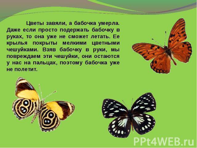 Цветы завяли, а бабочка умерла. Даже если просто подержать бабочку в руках, то она уже не сможет летать. Ее крылья покрыты мелкими цветными чешуйками. Взяв бабочку в руки, мы повреждаем эти чешуйки, они остаются у нас на пальцах, поэтому бабочка уже…
