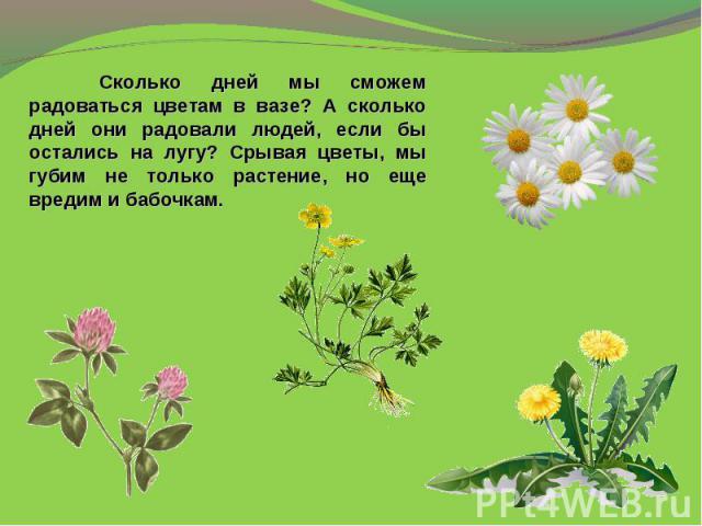 Сколько дней мы сможем радоваться цветам в вазе? А сколько дней они радовали людей, если бы остались на лугу? Срывая цветы, мы губим не только растение, но еще вредим и бабочкам.