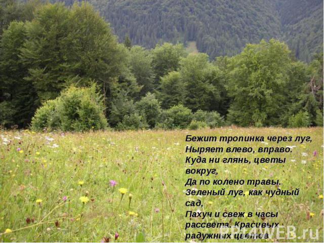 Бежит тропинка через луг, Ныряет влево, вправо. Куда ни глянь, цветы вокруг, Да по колено травы. Зеленый луг, как чудный сад, Пахуч и свеж в часы рассвета. Красивых радужных цветов На нем разбросаны букеты.И.Суриков