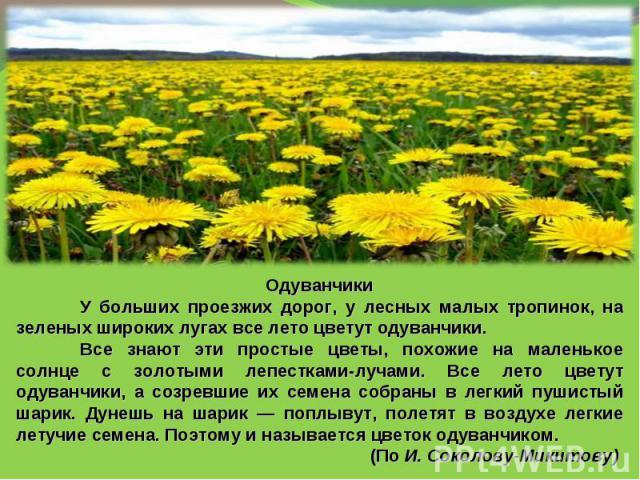 ОдуванчикиУ больших проезжих дорог, у лесных малых тропинок, на зеленых широких лугах все лето цветут одуванчики.Все знают эти простые цветы, похожие на маленькое солнце с золотыми лепестками-лучами. Все лето цветут одуванчики, а созревшие их семена…