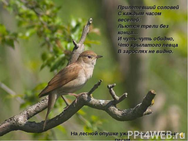 Прилетевший соловейСкаждым часом веселей:Льются трели без конца…Ичуть-чуть обидно,Что крылатого певцаВзарослях невидно.На лесной опушке уже слышатся птичьи песни.