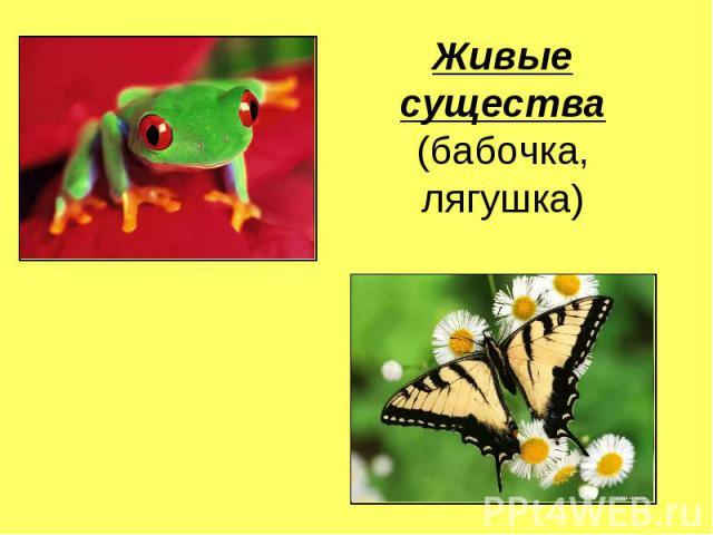 Живые существа(бабочка, лягушка)