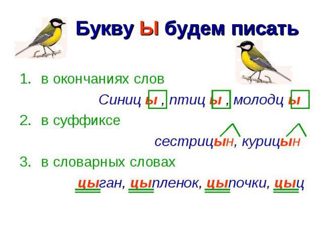 Букву Ы будем писать в окончаниях словСиниц ы , птиц ы , молодц ы в суффиксесестрицын, курицын в словарных словахцыган, цыпленок, цыпочки, цыц