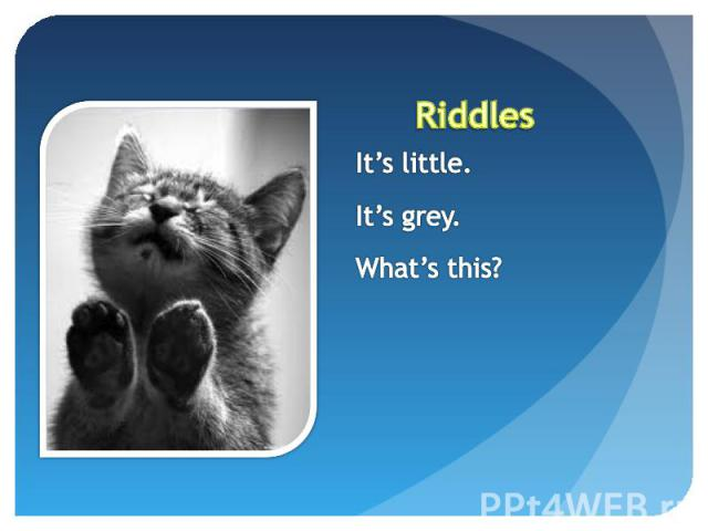 Riddles It's little.It's grey.What's this?
