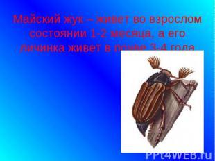 Майский жук – живет во взрослом состоянии 1-2 месяца, а его личинка живет в почв