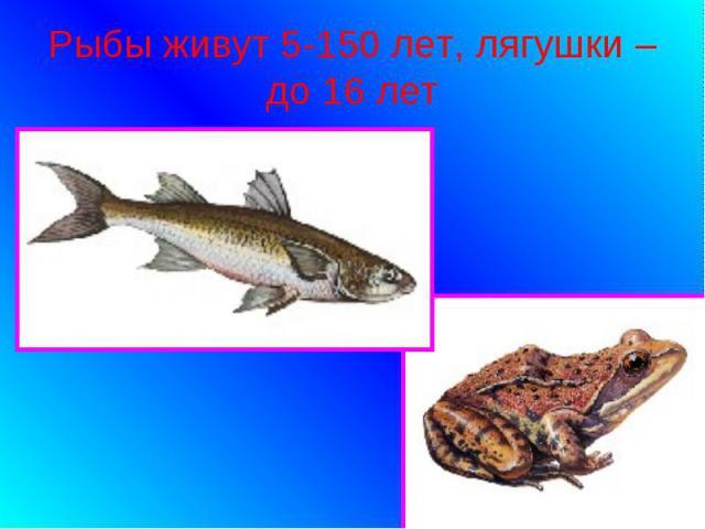 Рыбы живут 5-150 лет, лягушки – до 16 лет