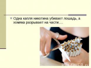 Одна капля никотина убивает лошадь, а хомяка разрывает на части….