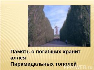 Память о погибших хранит аллеяПирамидальных тополей