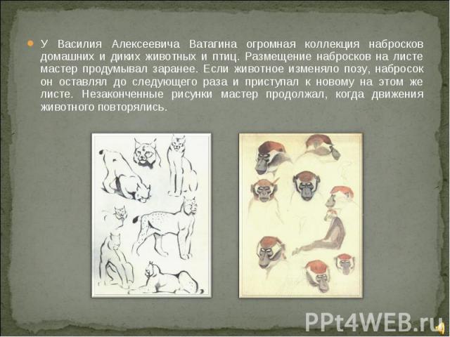 У Василия Алексеевича Ватагина огромная коллекция набросков домашних и диких животных и птиц. Размещение набросков на листе мастер продумывал заранее. Если животное изменяло позу, набросок он оставлял до следующего раза и приступал к новому на этом …