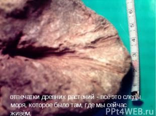 отпечатки древних растений - всё это следы моря, которое было там, где мы сейчас