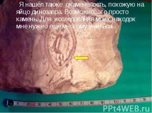 Я нашёл также окаменелость, похожую на яйцо динозавра. Возможно, это просто каме