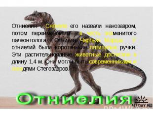 Отниелия . Сначала его назвали нанозавром, потом переименовали в честь знаменито