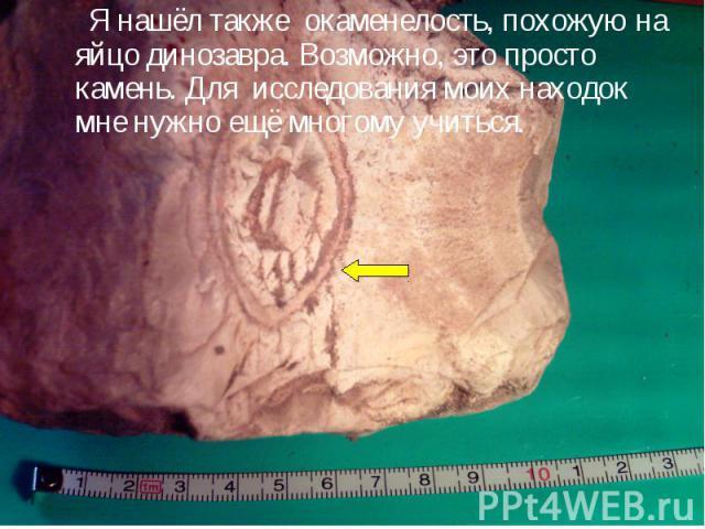 Я нашёл также окаменелость, похожую на яйцо динозавра. Возможно, это просто камень. Для исследования моих находок мне нужно ещё многому учиться.